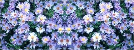 Settembrine myfavoritethings - Settembrini fiori ...